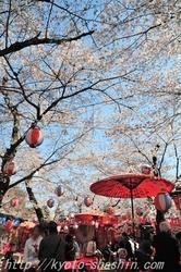 110406平野神社花見するz.jpg